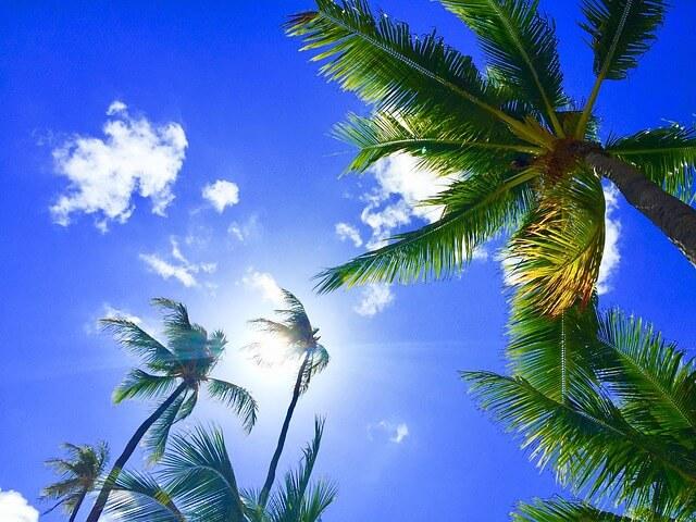 ハワイのヤシの木と青い空